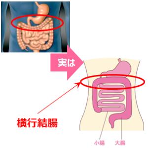 胃が上、大腸は下…常識のウソ