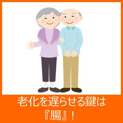 老化と腸の関係について
