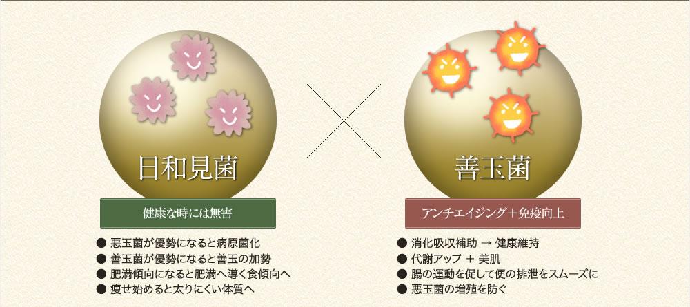 善玉菌と日和見菌を腸活で味方に!